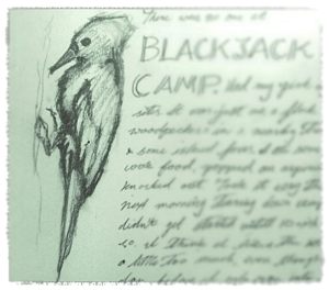 blackjack-woodpecker-sketch