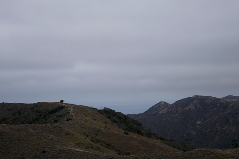 Lone Tree off in the interior of Catalina Island