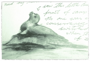 Sketch of a seal just chillin' with us campers.