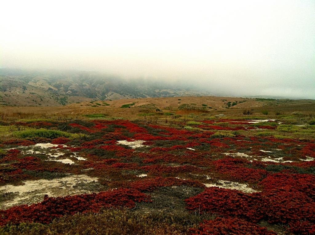 Scorpion Island, Channel Islands, CA